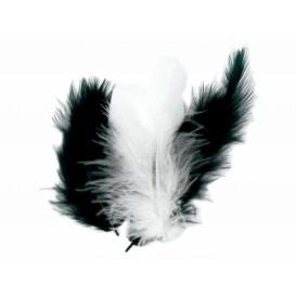 50 plumes d'oiseaux noir et blanc