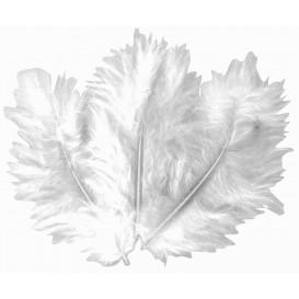 50 plumes d'oiseaux blanc