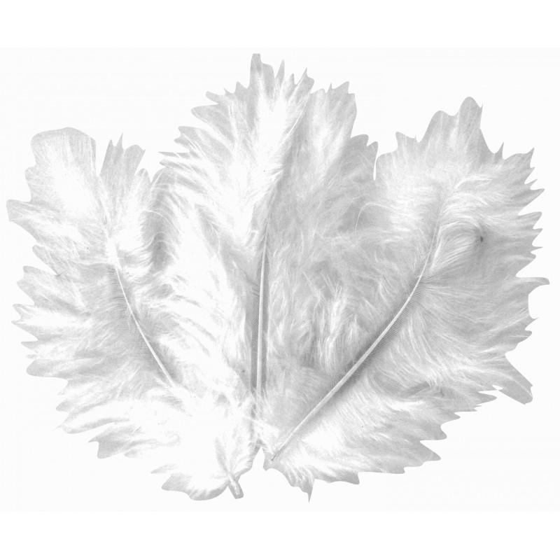 50 plumes d 39 oiseaux blanc - Signification des plumes d oiseaux ...