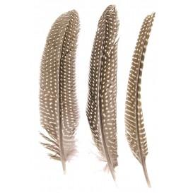 5 plumes de pintade 16cm à 19cm