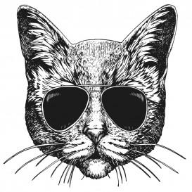 transfert vêtement chat à lunettes thermocollant