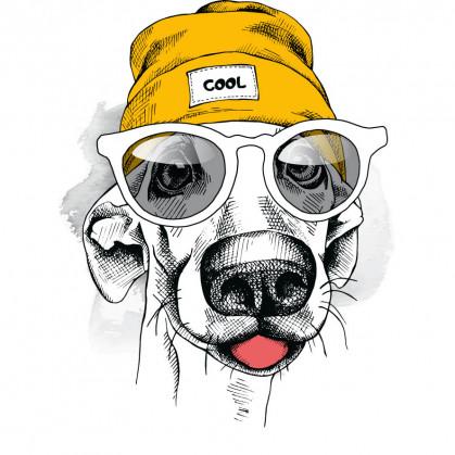 transfert vêtement chien bonnet thermocollant