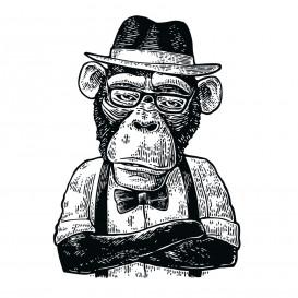 transfert vêtement singe habit thermocollant